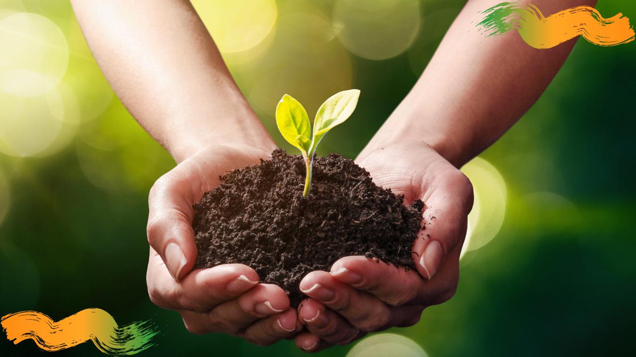 Sostenibilidad y ecología